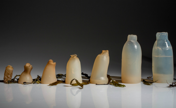garrafa de ágar