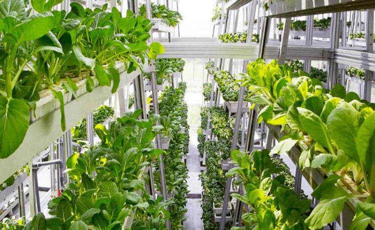 Sky Urban Farming System