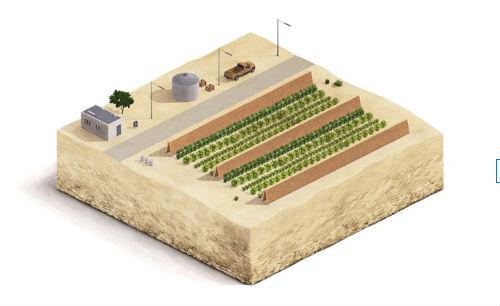 Revegetação e barreiras
