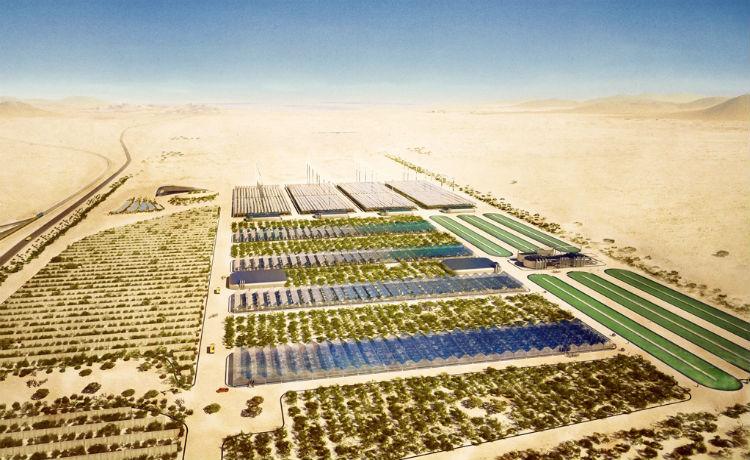 Plantação no deserto
