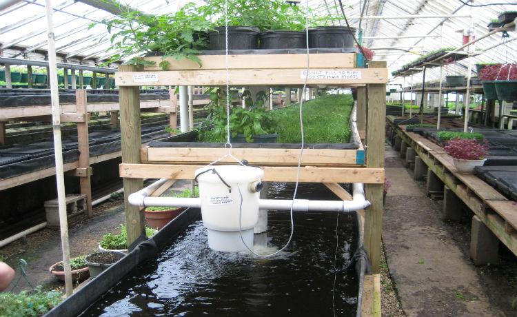 Eficiente sistema aquapônico