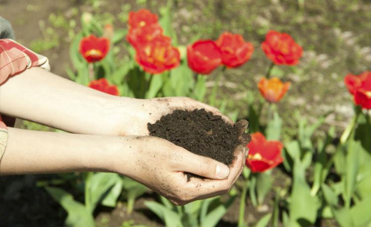 Produto da compostagem orgânica