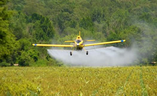 Aprenda a tirar pesticidas dos alimentos e coma sem preocupação