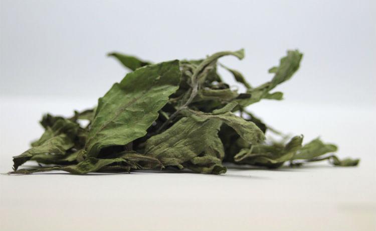Folhas secas de estévia, alternativa que pode ser usada para substituir açúcar e adoçantes