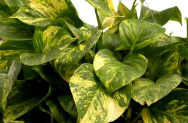 Conhe a onze plantas que crescem mesmo sob a sombra - Plantas exterior sombra ...