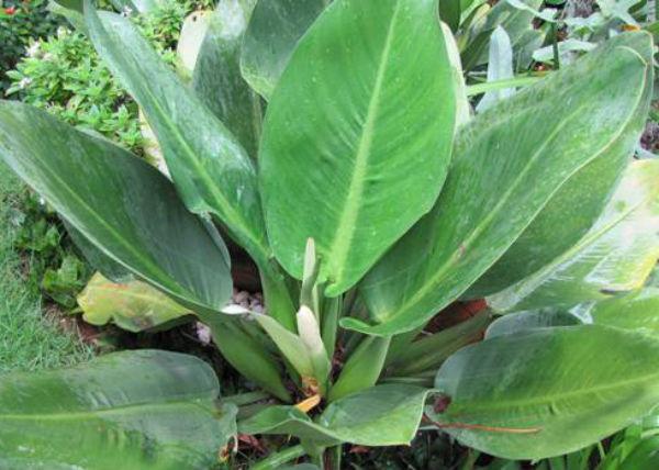 Conheça onze plantas que crescem mesmo sob a sombra  EcoAdubo