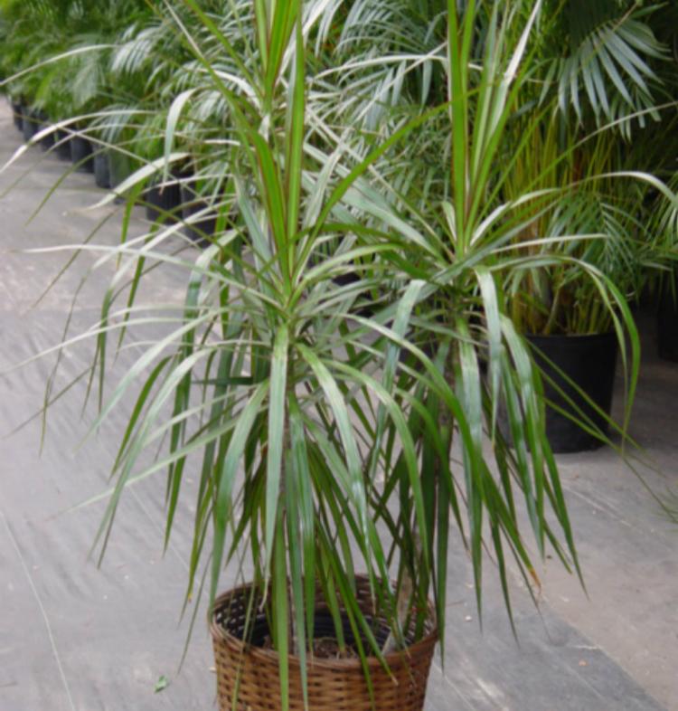 Plantas que podem ser cultivadas em casa e que funcionam ...