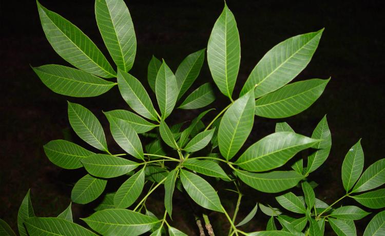 As Plantas Podem Ser Colocadas Nas Calhas De Duas Maneiras Nelas