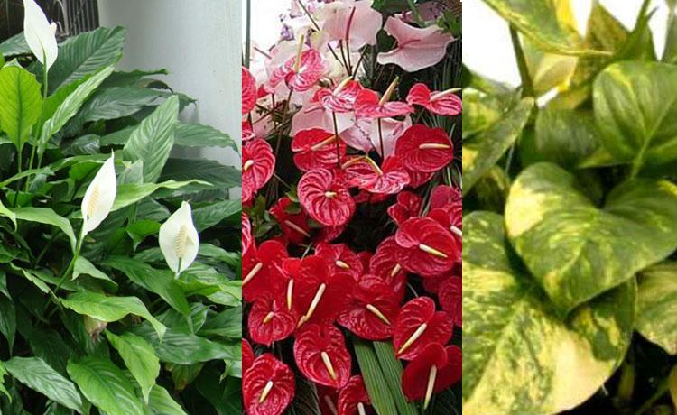 Plantas De Exterior Sol O Sombra