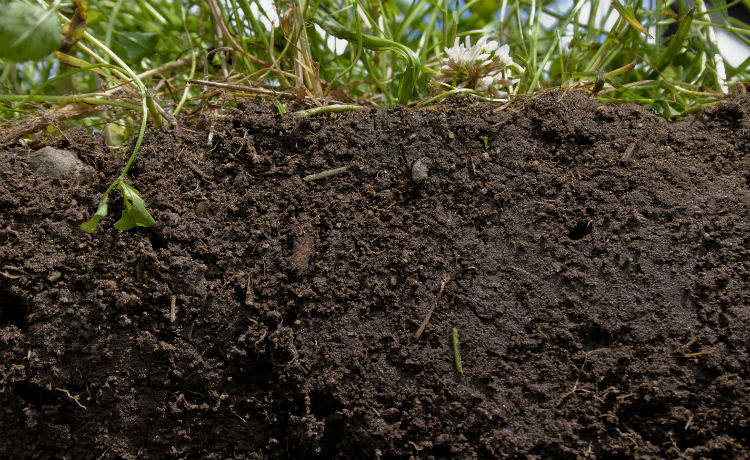 Terra. Problemas com a compostagem