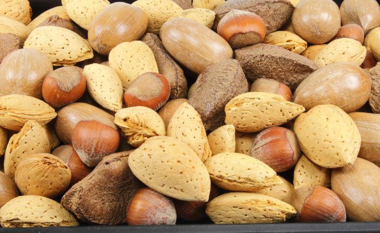 diferentes variedades de oleaginosas