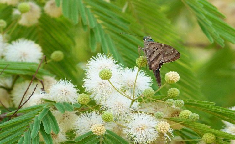 borboleta pousa no núcleo de uma flor branca com um fundo de folhas verdes