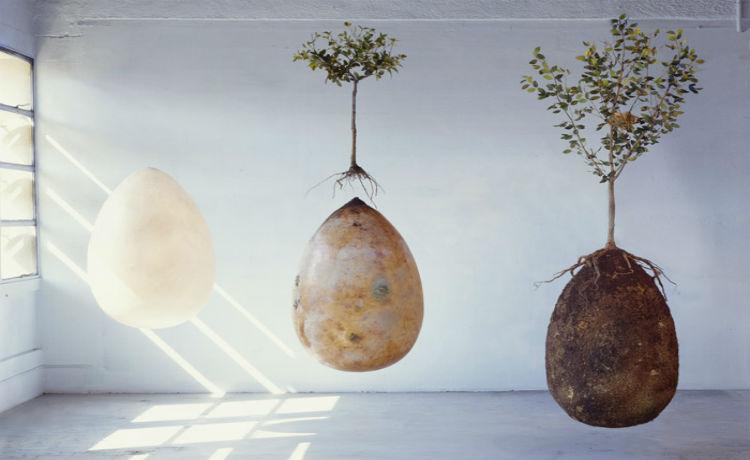 três estagios da capsula mundi, a capsula sozinha, a árvore jovem plantada acima da capsula, e por ultimo a capsula sob a árvore mais adulta.