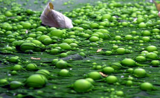 Lago eutrofizado