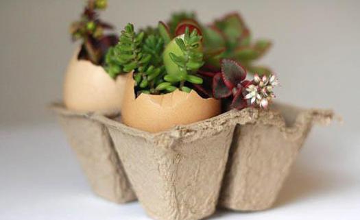 Reutilização pode ajudar a diminuir resíduos orgânicos em casa