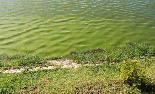 eutrofização das águas
