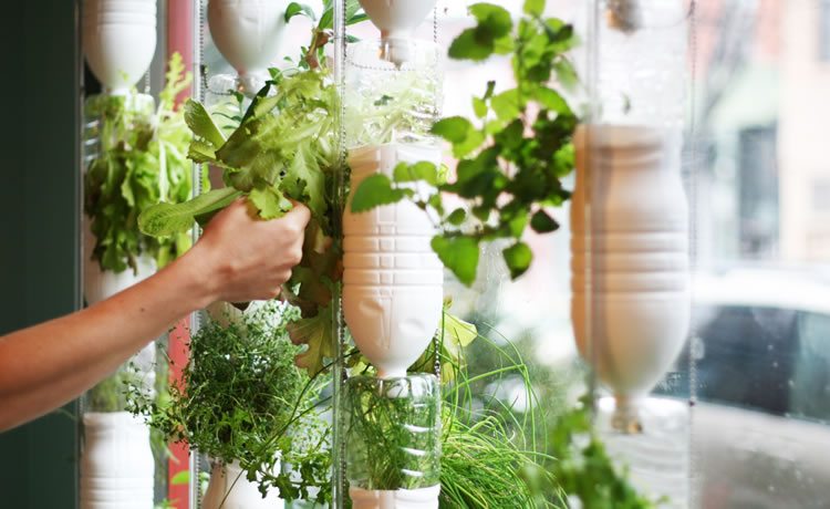 Agora é possível fazer uma horta em apartamento