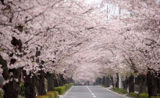 Nagatoro, Saitama, Japão