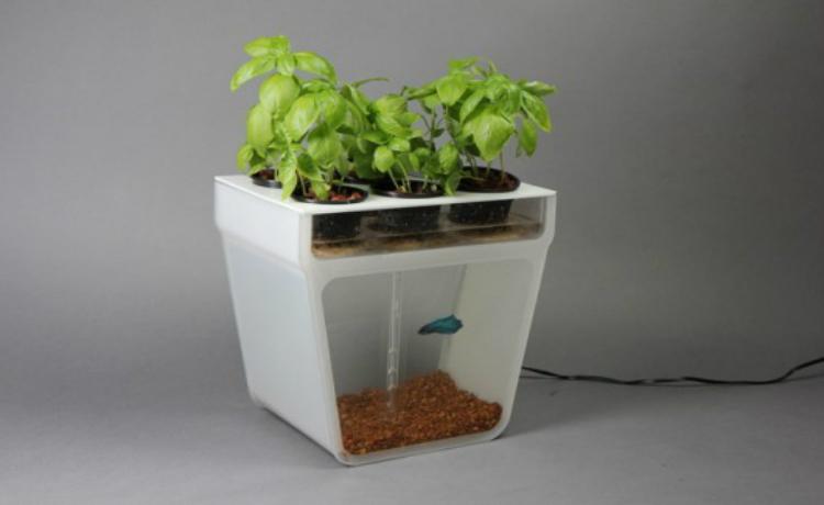 Vaso sustent vel horta e aqu rio ao mesmo tempo for Self sustaining garden with fish
