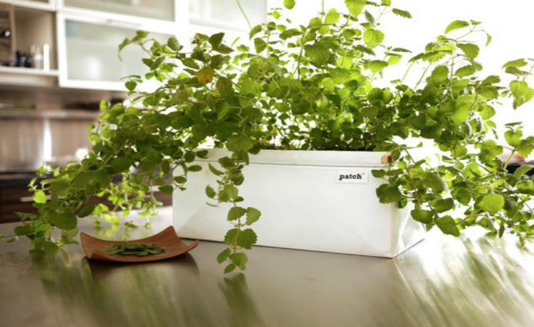 kit de jardinagem urbana