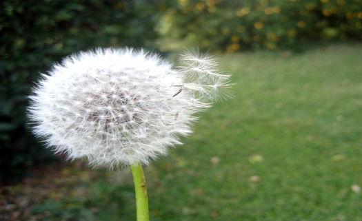 Três plantas medicinais para cultivar no quintal