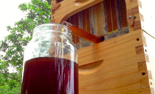 Flow Hive: uma proposta inovadora e polêmica para a produção de mel