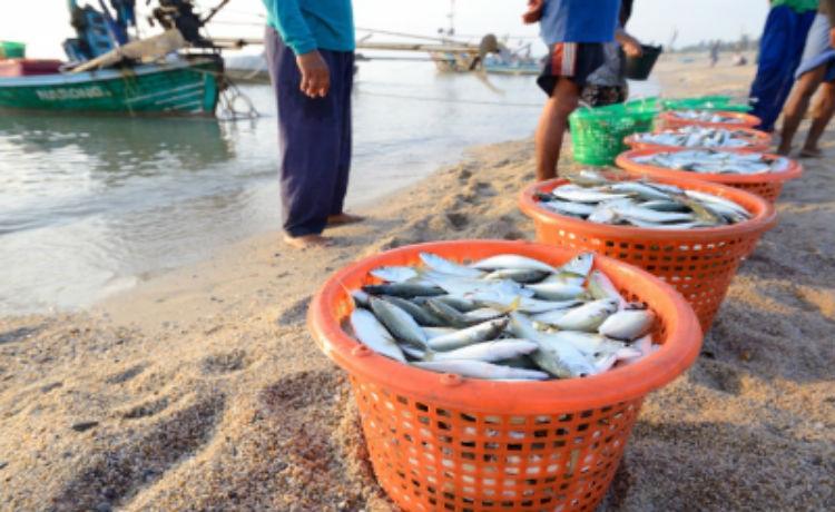 Peixes contaminados por mercúrio